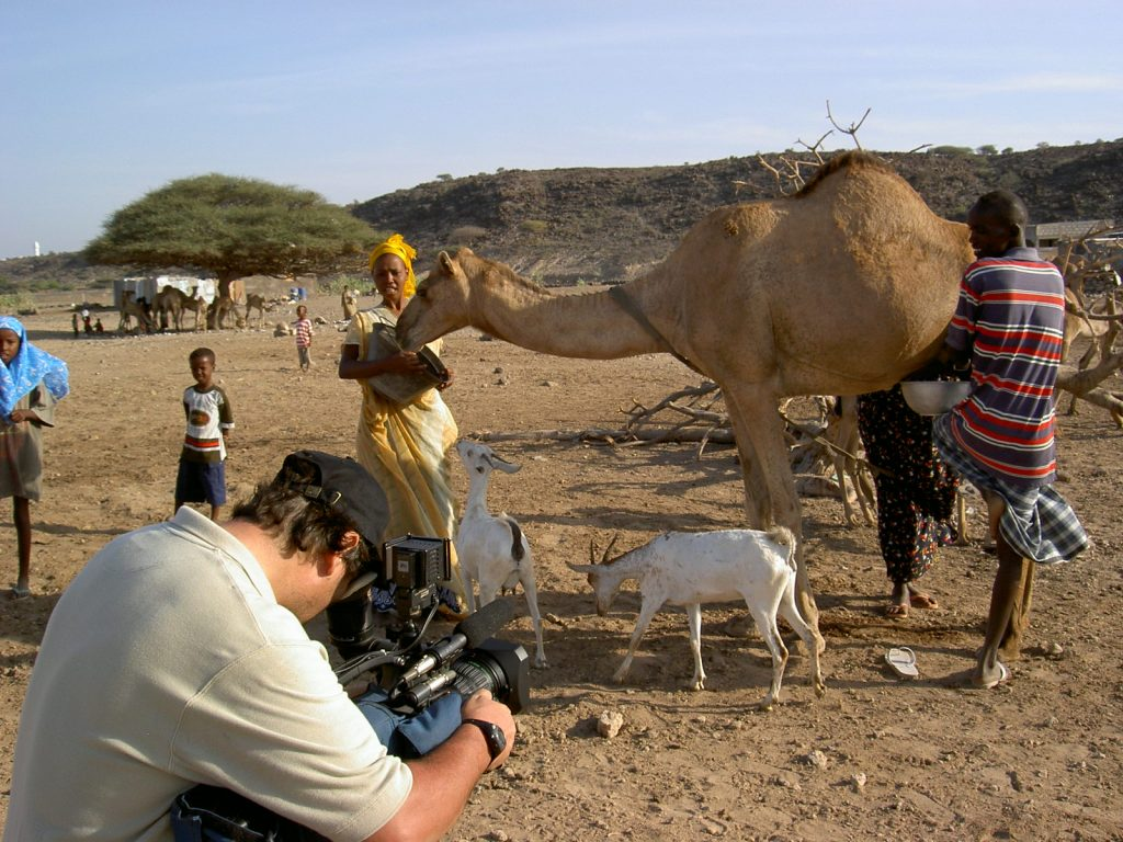 Beim Kamelmelken